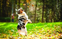 Autumn Safety Tips from the ASPCA