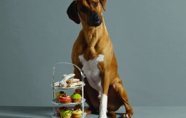 Pet Safety and Common Household Toxins    By Dr. Scotty Gibbs